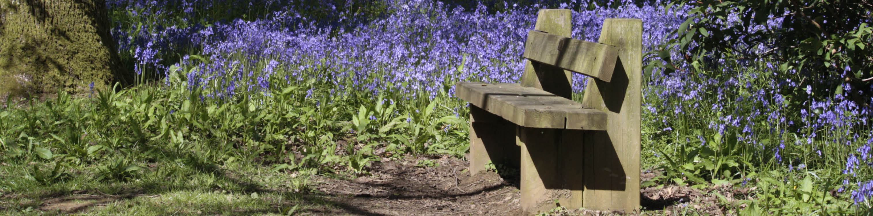 Sponsored bench surrounded by bluebells