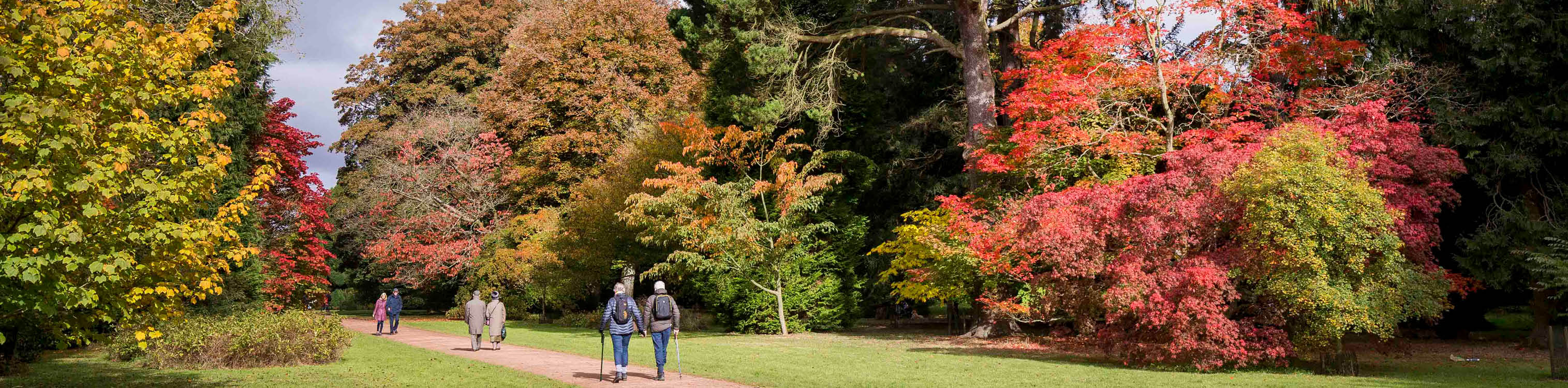 Three couples walking along a path lined with autumn trees