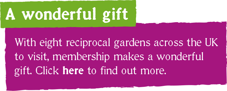With eight reciprocal gardens across the UK to visit, membership makes a wonderful gift. Click here to find out more.