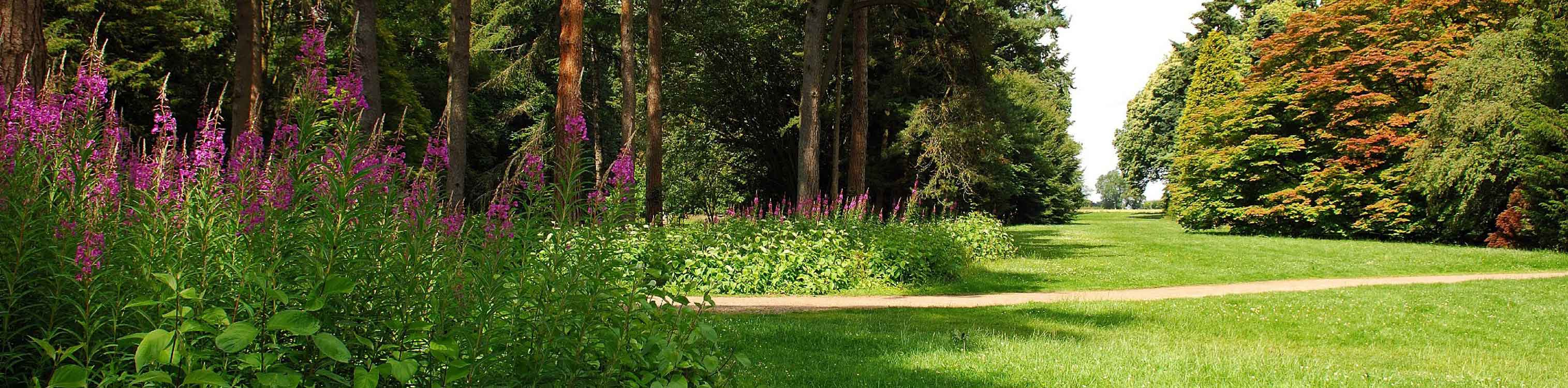 A grass path bordered by green bushes and pink flowers