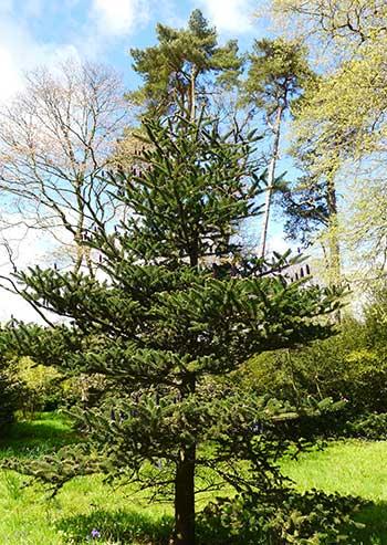 Blog Friends Of Westonbirt Arboretum