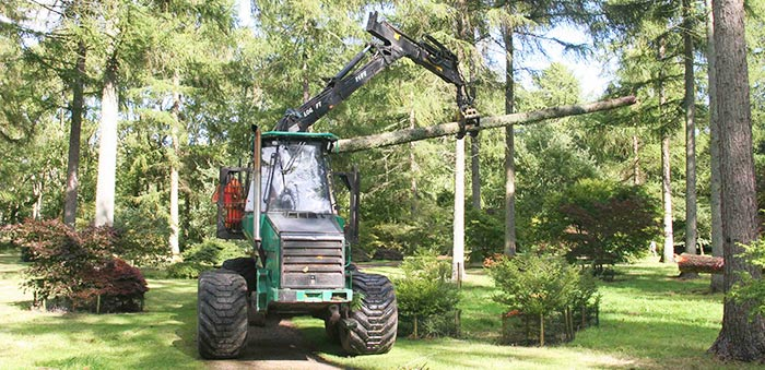 Supporting tree management at Westonbirt Arboretum