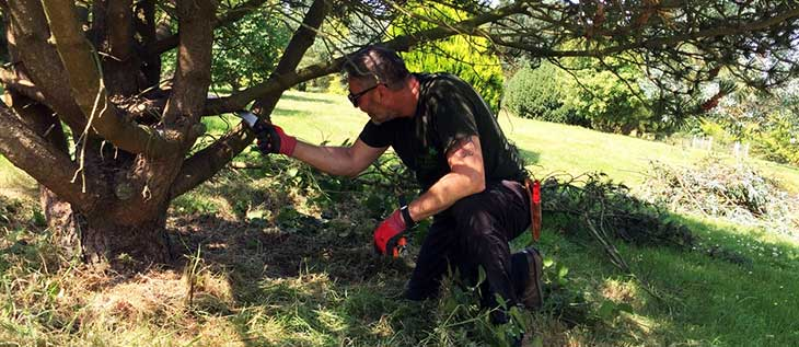 Mark Ballard pruning a Pine tree to improve mower access, which will control weed growth.