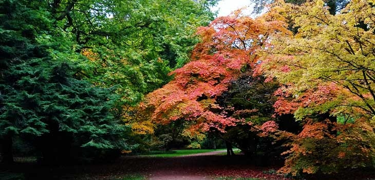 Maples turning red: A new red list of threatened maples is published